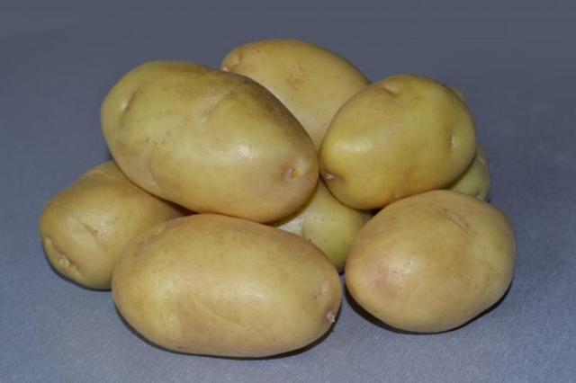 Картофель Импала: описание и характеристика сорта, выращивание, отзывы