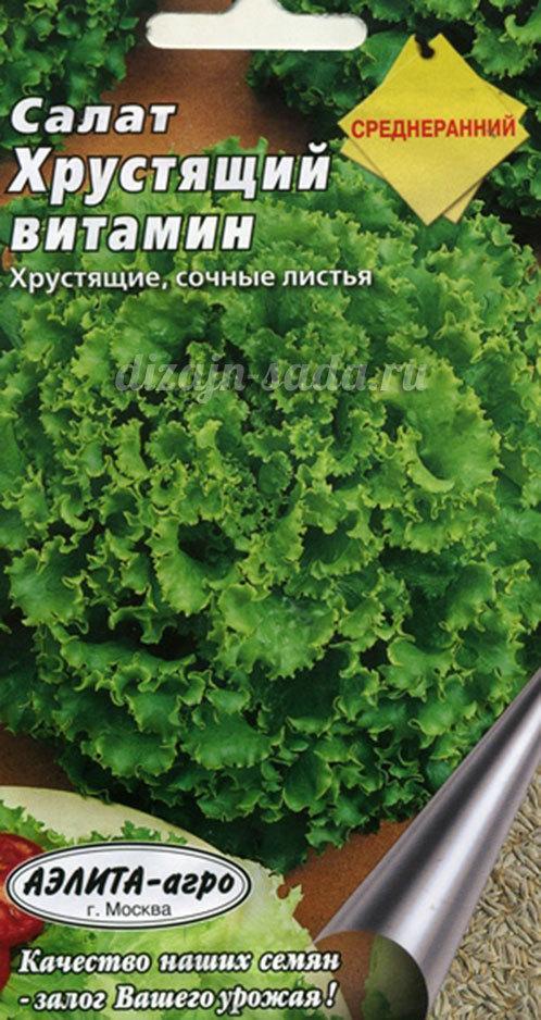 Салат латук: сорта, фото, посадка и уход, сбор, отзывы