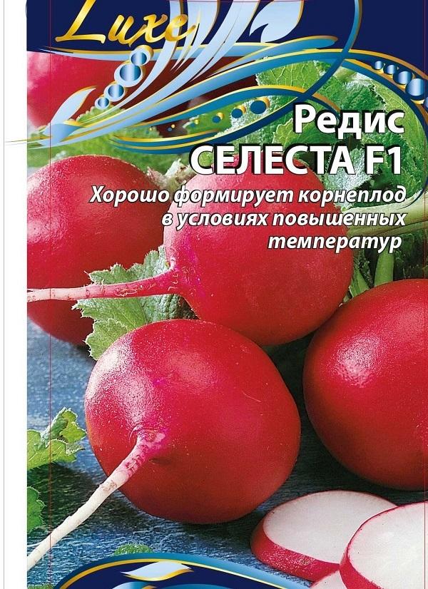 Редис Селеста: характеристика сорта, фото и правила выращивания