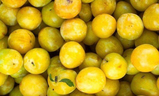 Желтая слива: сорта, фото, правила посадки и выращивания
