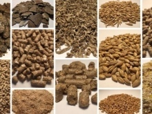 Чем кормить индюков: правила и особенности кормления