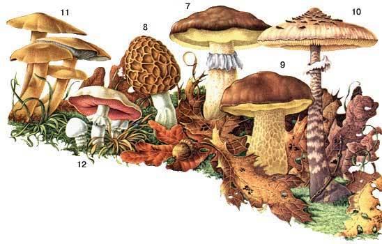 Поздние грибы ленинградской области
