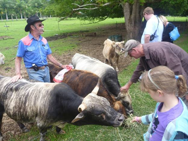 Карликовые коровы: описание пород мини-коров, внешний вид, тонкости выращивания