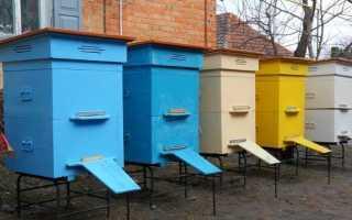 Двухматочное содержание пчел: особенности, правила, технологии