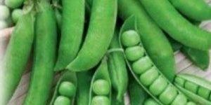 Красный горох: описание, правила выращивания, отзывы