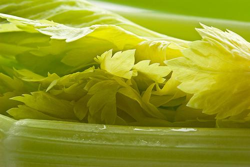 Сельдерей черешковый: лучшие сорта, выращивание, уход, сбор урожая, отзывы
