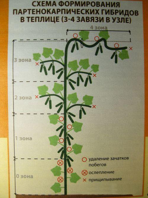 Полив огурцов в открытом грунте и теплице: методы, пошаговые инструкции