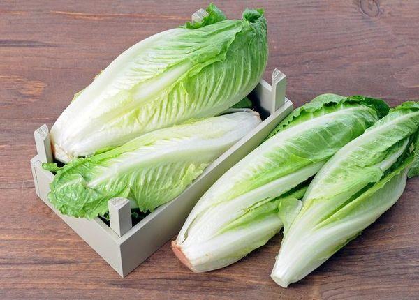 Салат ромэн: выращивание из семян, уход, сбор урожая, отзывы