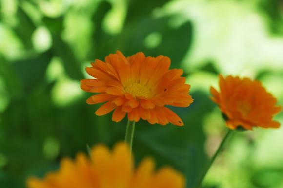 Медоносные растения и травы для пчел: названия, продуктивность, характеристики меда