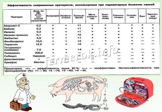 Болезни свиней: симптомы, лечение, профилактика