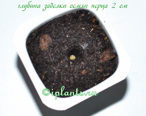 Посев перца на рассаду: сроки, подготовка грунта и семян, условия для прорастания