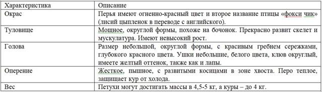 Куры Венгерский великан: характеристики породы, фото, содержание и разведение, отзывы