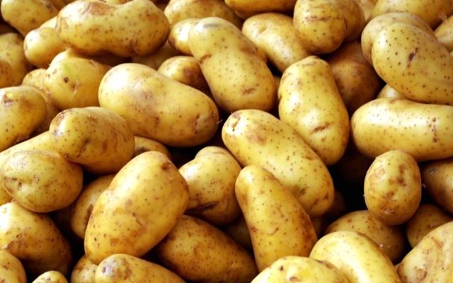 Картофель «Фермер»: описание сорта с фото, преимущества, недостатки, посадка и уход, отзывы