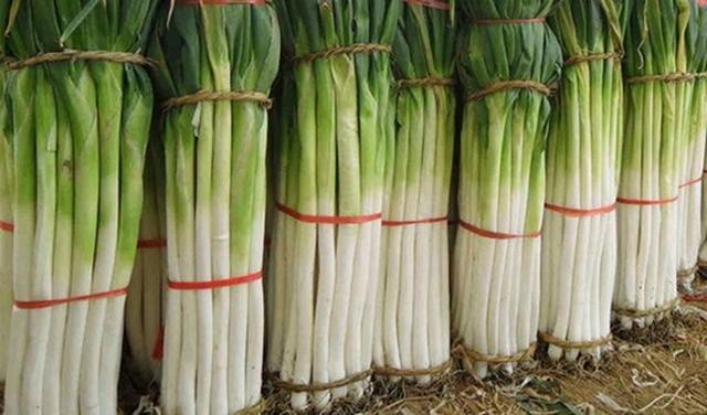 Лук-батун: описание сорта, фото и его выращивание