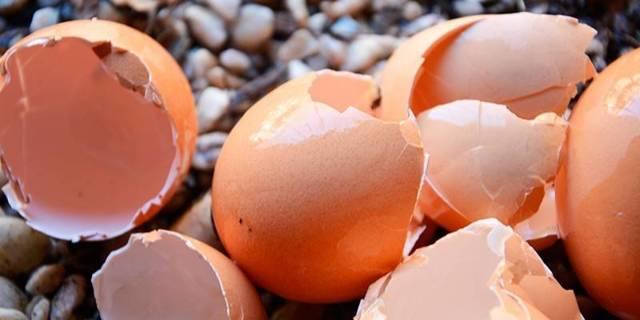 Яичная скорлупа как удобрение: свойства, изготовление, применение