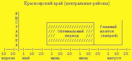 Главный взяток у пчел: сроки, подготовка, условия, продолжительность