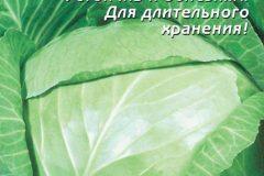 Капуста Слава: характеристика, сравнение, посадка рассадой и семенами, уход и отзывы