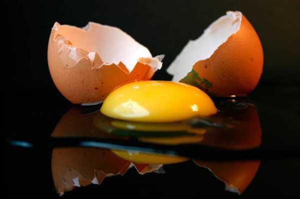 Строение куриного яйца: химический состав белка и желтка
