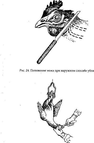 Как разделать индейку: инструкция забоя, ощипывания и потрошения в домашних условиях