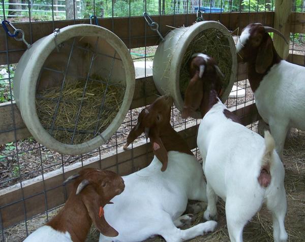 Сарай для коз своими руками: пошаговые инструкции, обустройство, утепление