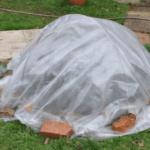 Уход за жимолостью осенью: пересадка, обрезка, подкормка, полив, укрытие на зиму