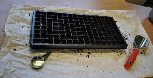 Выращивание цветной капусты: агротехника, подготовка рассады, посадка, уход, сбор урожая