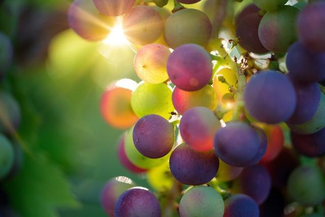 Посадка винограда весной саженцами: пошаговые инструкции