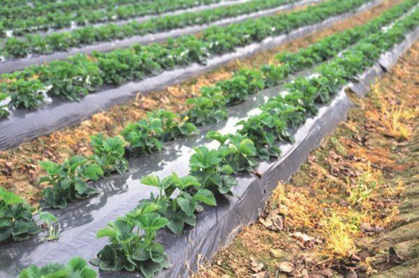 Мульчирование почвы: для чего нужно, виды мульчи, используемые материалы