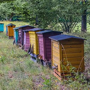Пчеловодство для начинающих (советы пчеловоду): о самом важном