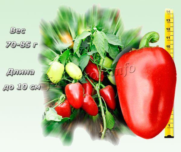 Перец Ласточка: описание сорта с фото, посадка, выращивание, уход, плюсы и минусы, отзывы