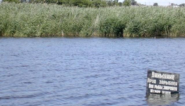 Летование прудов: что это, когда и зачем применяется, как проводится?
