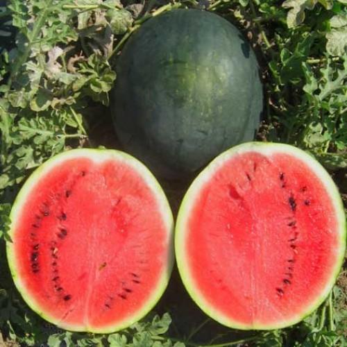 Выращивание арбузов в Сибири: лучшие сорта, технология посадки, сбор и хранение урожая