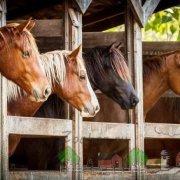 Клички для лошадей: красивые русские, арабские и английские имена для жеребца