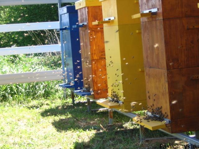 Содержание пчел в многокорпусном улье: преимущества и инструкции