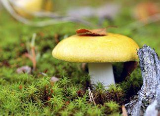 Съедобные грибы: название, фото и описание съедобных видов