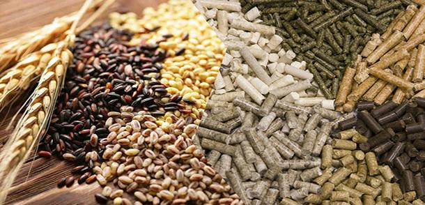 Чем кормить уток: виды кормов и рацион кормления