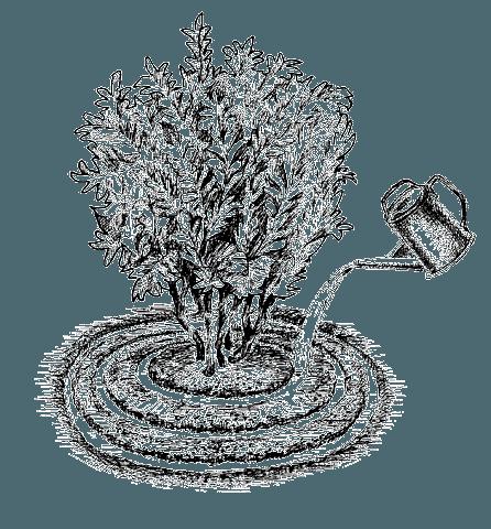 Слива Стенлей (Стенли): описание сорта, фото, посадка и уход, отзывы