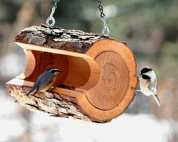 Кормушка для голубей своими руками: пошаговая инструкция, требования, материалы