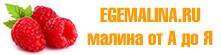 Малина Карамелька: описание сорта, фото, отзывы и правила выращивания