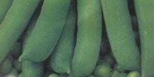 Горох Амброзия: описание сорта, фото, посадка и уход, сбор и хранение
