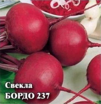 Свекла Бордо: описание сорта, фото, выращивание, отзывы