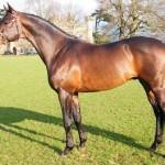 Тракененская порода лошадей: описание характеристик, фото, уход и содержание, отзывы