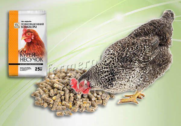 Комбикорм для кур: виды, состав, нормы, рецепты (как приготовить комбикорм самому)
