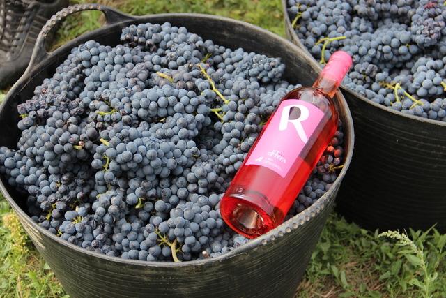 Особенности винограда Молдова описание сорта и нюансы агротехники