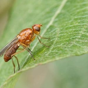 Болезни и вредители петрушки: методы борьбы и профилактики