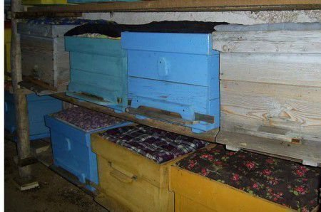 Когда выставлять пчел из зимовника: сроки и правила выставки