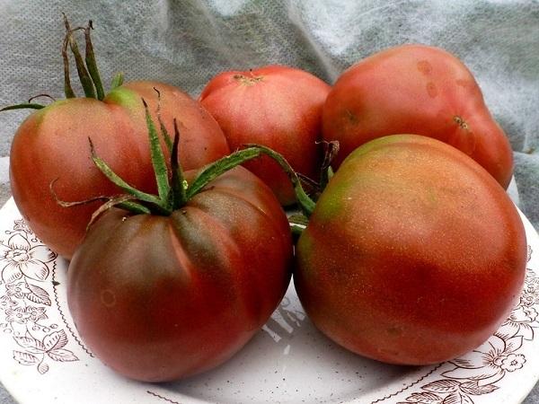 Томат Черномор: описание и характеристики сорта, фото, правила выращивания, отзывы