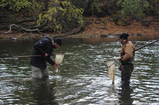 Как и когда ловить раков: места обитания, время и способы ловли, прикорм и полезные советы