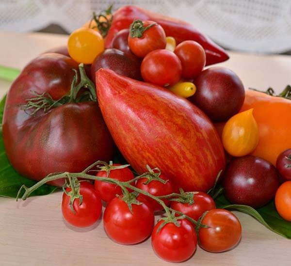 Как прорастить семена помидоров на рассаду правильно в домашних условиях
