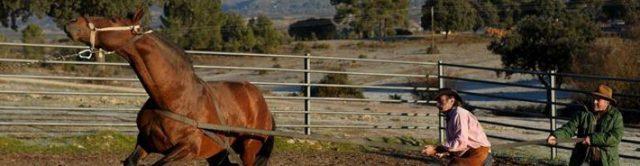 Как приручить лошадь: особенности, налаживание контакта, проведение тренировок